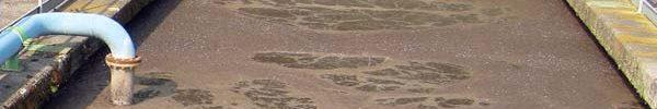 fanghi-di-depurazione-duedd